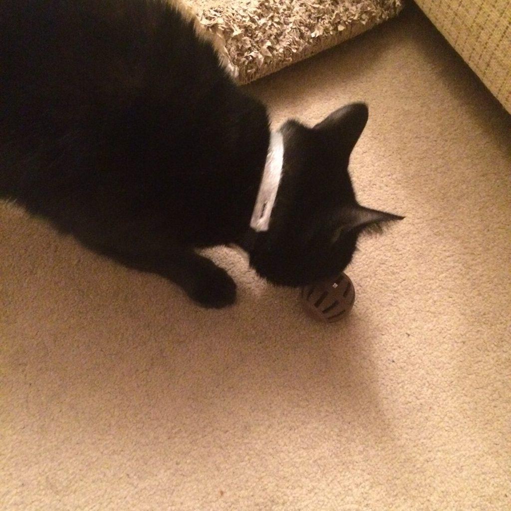 Loki playing with his 3D printed ball