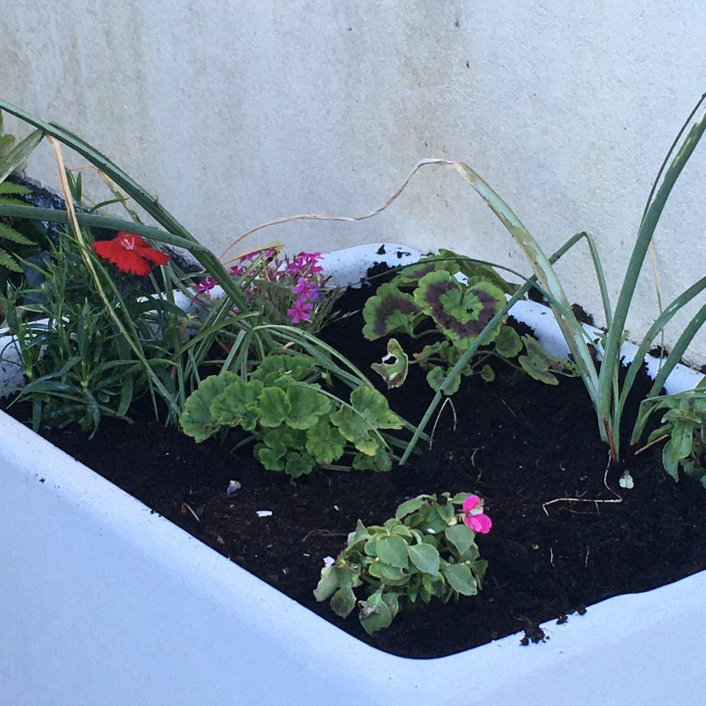 Getting creative in the garden - upcycled Belfast sink filled with plants