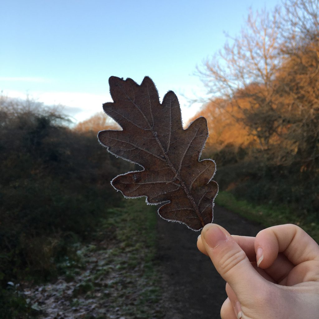 A frosty leaf against blue sky