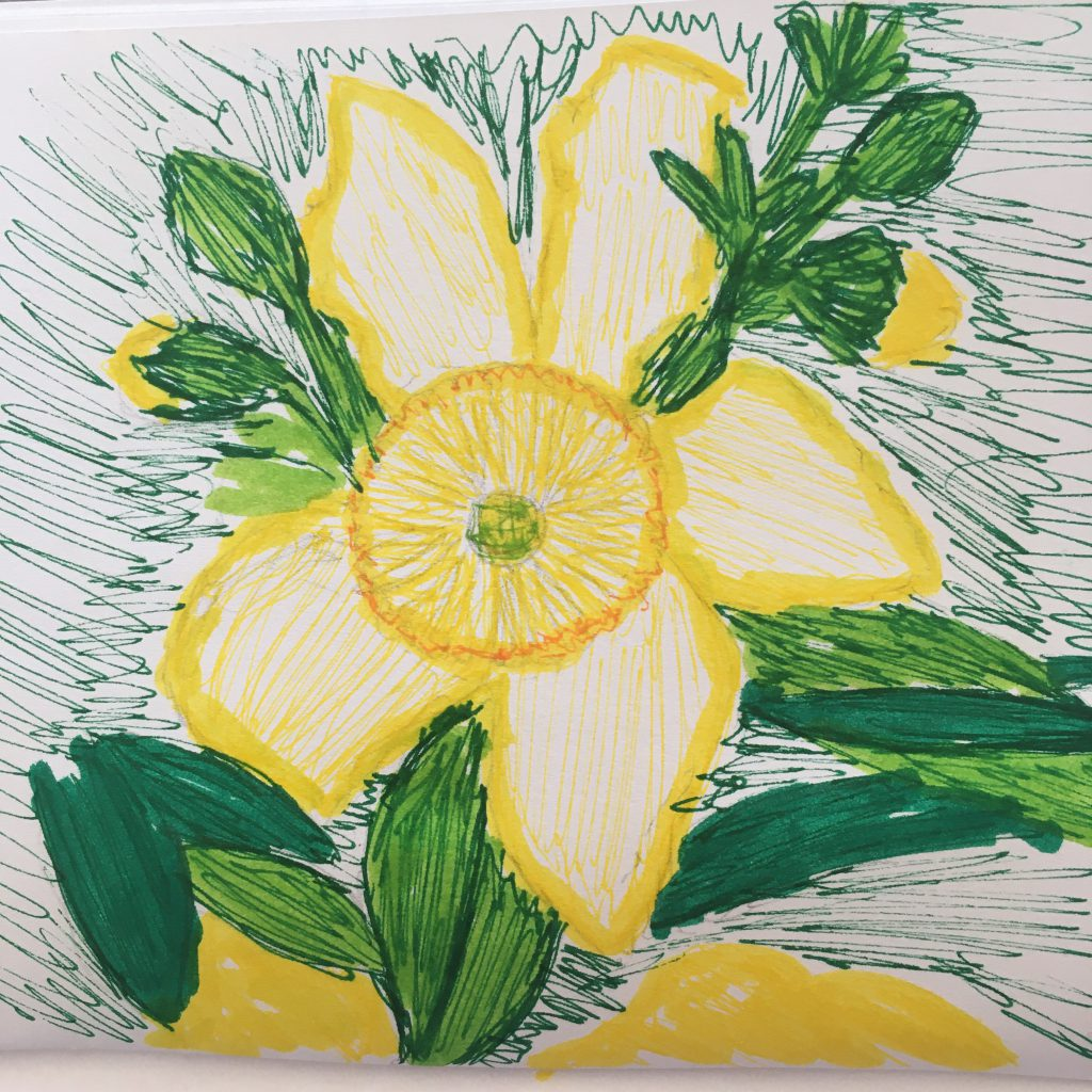 30 Days Wild - Sketch from Nature - rough sketch in coloured pen, of Rose of Sharon flower and buds